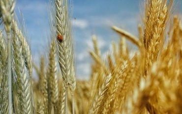 Семейные фермы смогут выкупить землю с рассрочкой до 20 лет