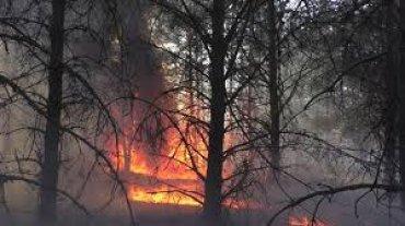 Под Чернобылем горит зона отчуждения