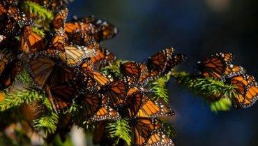 Причиной нашествия бабочек в Киеве стал «моментальный» приход весны – энтомолог