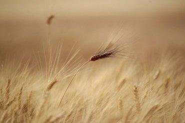 В Украине 15% земель страдают от засухи