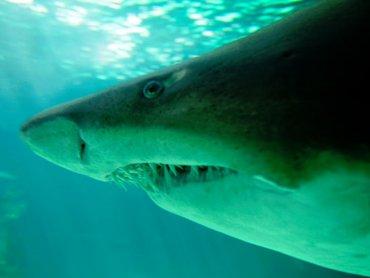 Уникальных светящихся акул нашли в водах Калифорнии