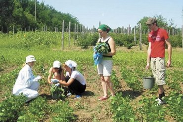 Почему украинцы больше не хотят работать на клубничных плантациях в Польше
