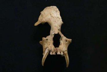 В Китае в гробнице нашли вымершее существо