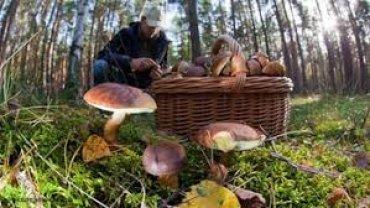 Россиянам позволят свободно собирать грибы и ягоды