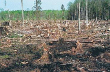 Ежедневно на планете исчезает участок леса площадью с Нью-Йорк