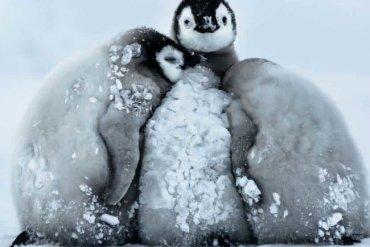 В Антарктиде зафиксировали рекордно низкую температуру на Земле