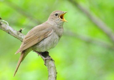 Ученые научили ИИ определять птиц по пению