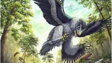 Птицы мелового периода были чемпионами по размножению