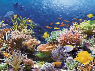 Возрастающая кислотность океана может погубить коралловые рифы
