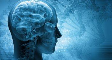 Ученым впервые в мире удалось перепрограммировать мозг