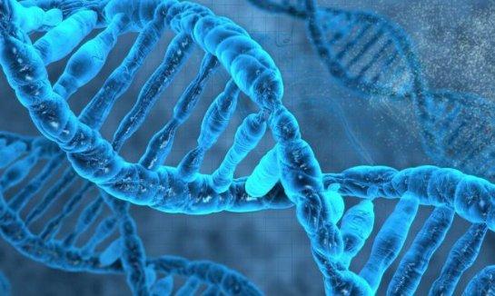 Тест ДНК в домашних условиях