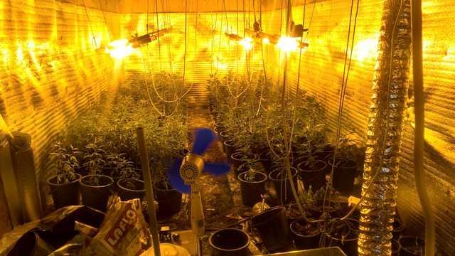 Андрей Головач: проституция, наркотики, конвертцентры