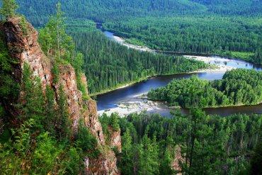 Площадь лесов на Земле за последние 35 лет выросла на 7%