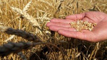 Основным поставщиком зерновых в Саудовскую Аравию может стать Украина