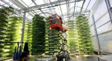 В США создали огромную вертикальную ферму