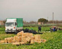 В Польше признали рост экономики благодаря трудовым мигрантам из Украины