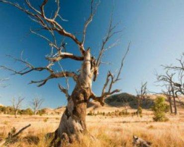 Зимы не будет, леса исчезнут: ученые ошарашили прогнозом