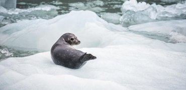 В Арктике начал таять самый старый и прочный ледник