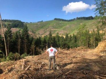 Карпаты на экспорт: лес рубят – щепки летят