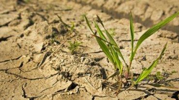 Власти Крыма продолжают подсчитывать ущерб от засухи