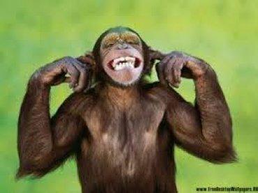 Ученые выяснили, что дети и шимпанзе мыслят одинаково