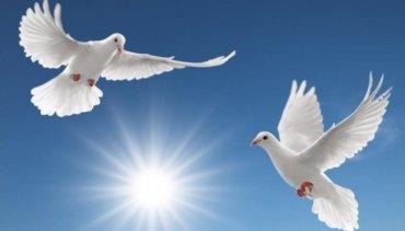 Сегодня – Международный день мира