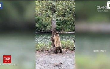 Медведь танцующий «тверк»