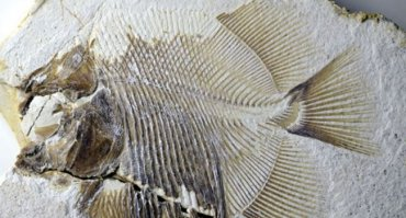 Ученые нашли удивительное древнее существо