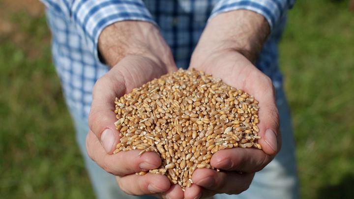 Храним зерно правильно