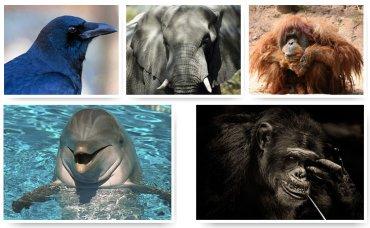 Составлен рейтинг самых умных животных в мире