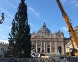 В Ватикане установили 21-метровую рождественскую елку